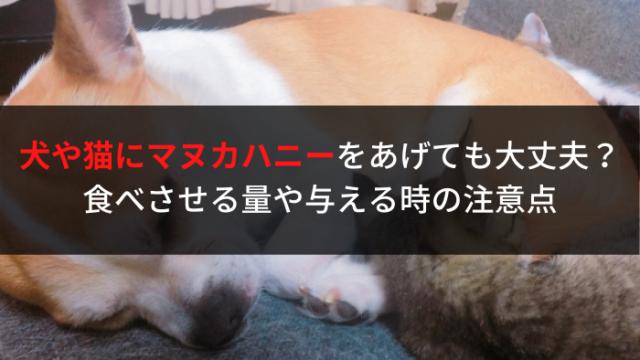 犬猫マヌカハニー
